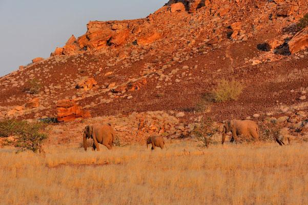 Namibia - Rundfahrt - Reise - Rundreise - Twyfelfontain - Landschaft - Elefanten