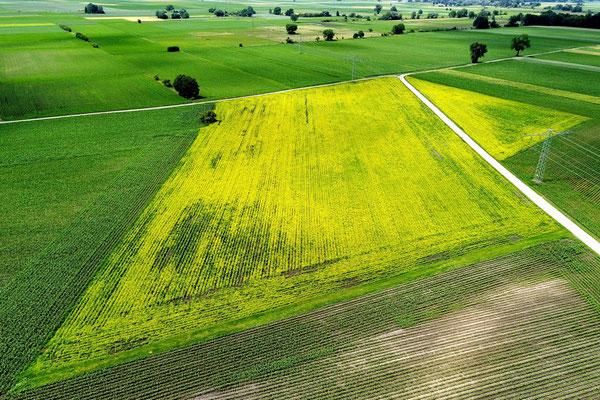 Vogelperspektive, Drohnenfoto, Drohnenbild, Luftaufnahme, Bayern, Feld, Grün, Sommer, Gelb, Raps, Acker