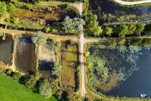 Drohnenfoto - Vogelperspektive - Drohne - Drohnenbild - Luftaufnahme - See - Egling - Bayern