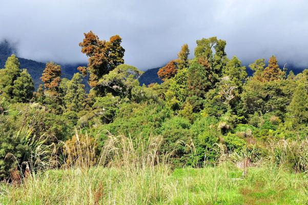 Neuseeland, Südinsel, Wald, Nebel