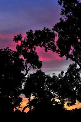 Australien, Australia, Nordaustralien, Northern Territory, Landschaft, Lila, Silhouette, Sonnenuntergang
