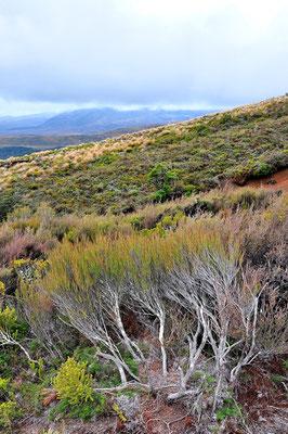 Neuseeland, Nordinsel, Wanderung, Panorama, Landschaft, Tongariro Nationalpark