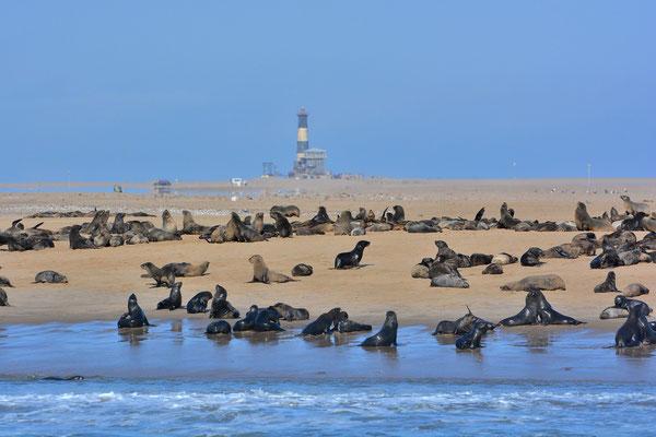 Namibia - Rundfahrt - Reise - Rundreise - Landschaft - Walvis Bay - Atlantischer Ozean - Robben - Seelöwen
