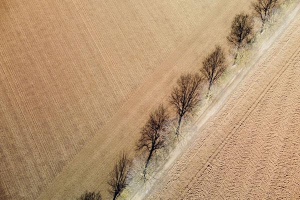 Vogelperspektive, Drohnenfoto, Drohnenbild, Schattenspiel, Luftaufnahme, Feld, Braun, Streifen, Bäume, Schatten, Muster, Flecken