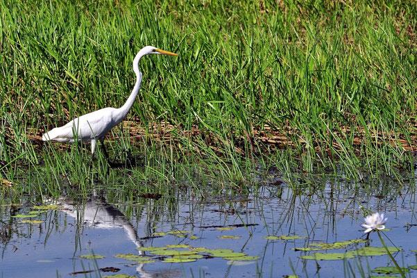 Australien, Australia, Nordaustralien, Northern Territory, Landschaft, Wasservogel, See, Spiegelung, Kakadu Nationalpark, Yellow Water River Cruise