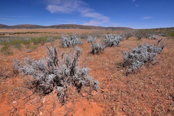 Australien, Australia, Südaustralien, South Australia, Landschaft, Busch, Flinders Ranges