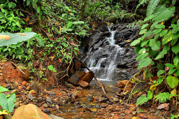 Pura Vida - Costa Rica - Dominical