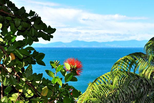 Neuseeland, Südinsel, Wald, Küste, See, Meer, Abel Tasman National Park