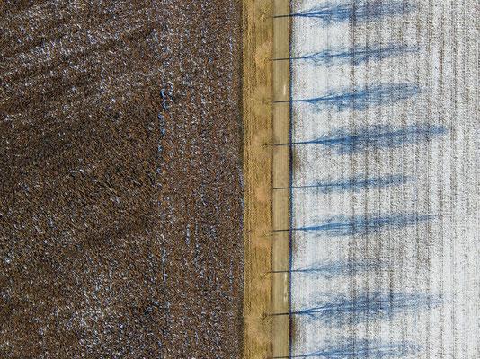 Vogelperspektive, Drohnenfoto, Drohnenbild, Schattenspiel, Luftaufnahme, Bayern, Feld, Weiss, Braun, Streifen, Bäume, Schatten, Winter