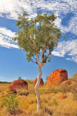 Australia - Australien -Zentralaustralien - Outback - Northern Territory - Landschaft - Devil's Marbles