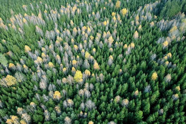 Vogelperspektive, Drohnenfoto, Drohnenbild, Luftaufnahme, München, Perlach, Bäume, Wald