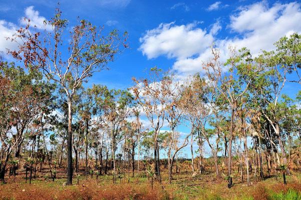 Australien, Australia, Nordaustralien, Northern Territory, Landschaft, Litchfield National Park