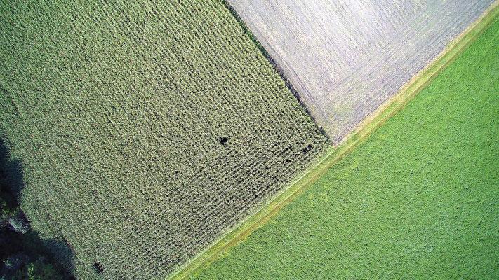 Vogelperspektive, Drohnenfoto, Drohnenbild, Schattenspiel, Luftaufnahme, Bayern, Feld, Weiss, Grün, Streifen, Bäume, Schatten, Muster, Flecken, Quadrat
