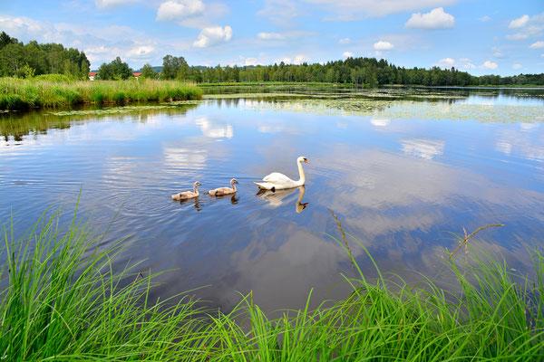 Bayern, Seen, Wanderung, Sommer, Schwaigsee
