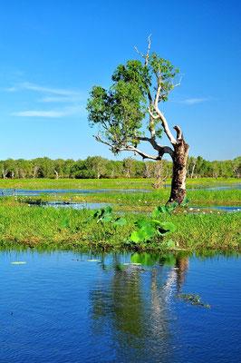 Australien, Australia, Nordaustralien, Northern Territory, Landschaft, See, Spiegelung, Baum, Hochwasser, Kakadu Nationalpark, Yellow Water River Cruise