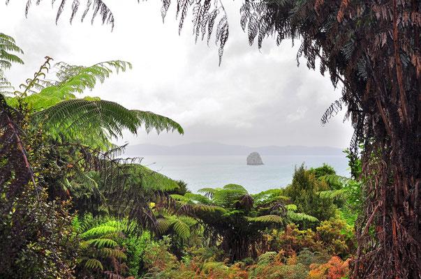 Neuseeland, Nordinsel, Nebel, Rahmen, Insel, Regenwald, Farren, Coromandel Peninsula