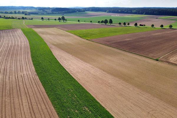 Vogelperspektive, Drohnenfoto, Drohnenbild, Luftaufnahme, Bayern, Feld, Grün, Braun, Streifen, Sommer, Acker