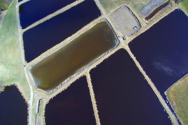 Vogelperspektive, Drohnenfoto, Drohnenbild, Schattenspiel, Luftaufnahme, Bayern, Feld, Grün, Streifen, Bäume, Schatten, Muster, Flecken, Teich