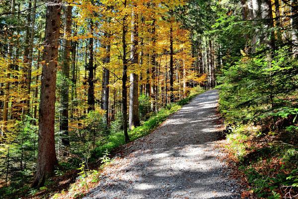 Bayern, Berge, Landschaft, Wanderung, Gindelalm