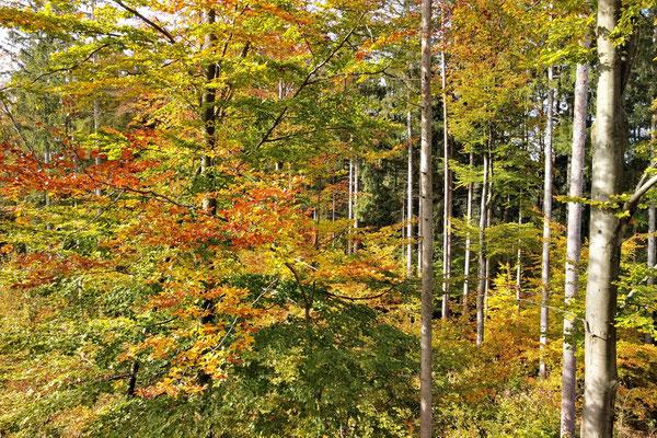 Vogelperspektive, Drohnenfoto, Drohnenbild, Luftaufnahme, Herbst, Farbenfroh, Wald, Stein See, Spaziergang