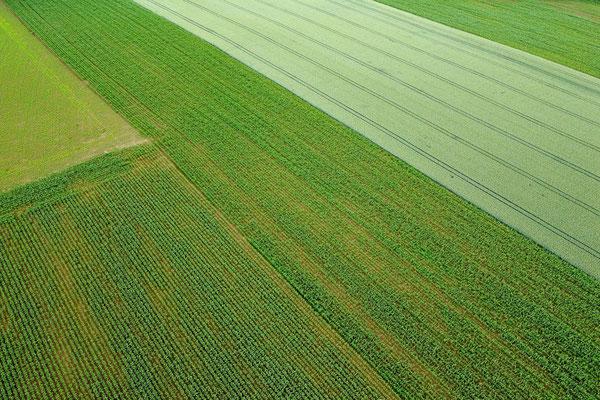 Vogelperspektive, Drohnenfoto, Drohnenbild, Luftaufnahme, Bayern, Feld, Grün, Sommer, Acker