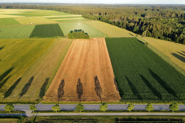 Vogelperspektive, Drohnenfoto, Drohnenbild, Luftaufnahme, Bayern, Feld, Grün, Braun, Äcker Nebeneinander, Streifen, Sommer, Schatten