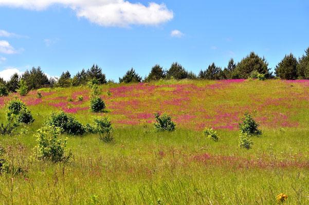 Litauen, Rundreise, Landschaft,  Rambyno Regioninis Parkas, Regionalpark