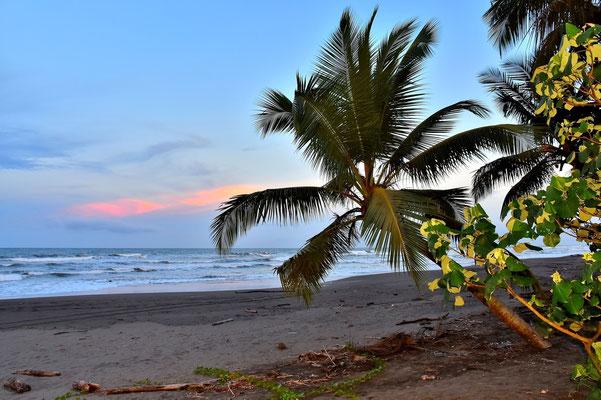 Pura Vida - Costa Rica - Tortuguero Nationalpark