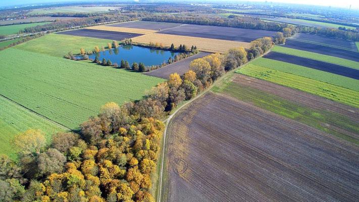 Vogelperspektive, Drohnenfoto, Drohnenbild, Luftaufnahme, Bayern, Feld, Grün, Braun, Streifen, Wald, Bäume, See eckig, Sommer