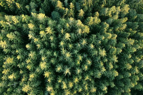 Vogelperspektive, Drohnenfoto, Drohnenbild, Luftaufnahme, Bäume, Wald von oben, Sommer