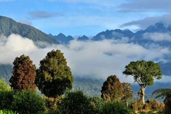 Neuseeland, Südinsel, Wald, Berge, Schnee, Nebel