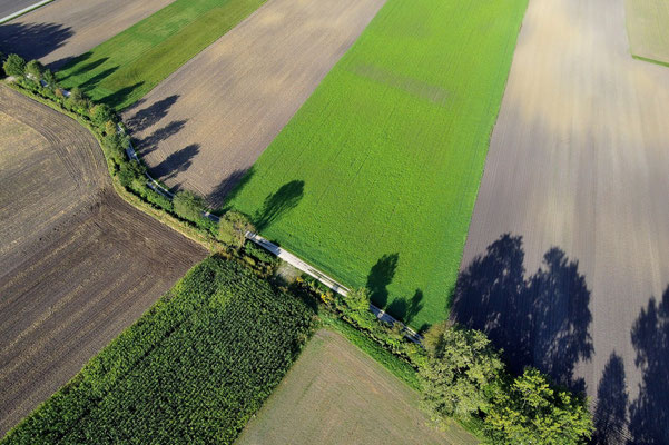 Vogelperspektive, Drohnenfoto, Drohnenbild, Luftaufnahme, Bayern, Feld, Grün, Braun, Schatten, Parzellen, Streifen, Sommer