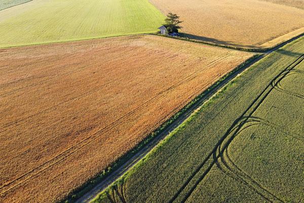 Vogelperspektive, Drohnenfoto, Drohnenbild, Luftaufnahme, Bayern, Feld, Grün, Braun, Streifen, Sommer, Baum allein