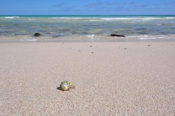 Australien, Australia, South Australia, Kangaroo Island, Landschaft, Meer, Sandstrand, Stokes Bay