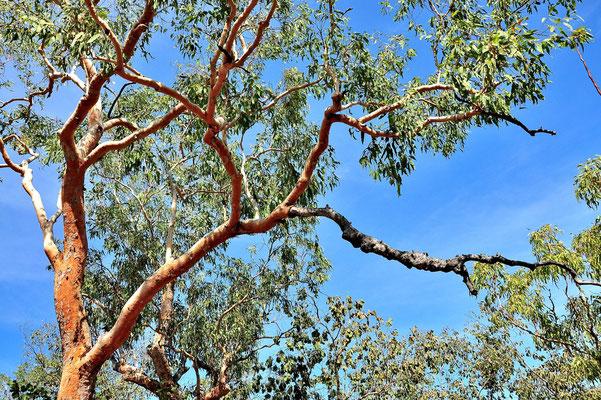 Australien, Australia, Nordaustralien, Northern Territory, Landschaft, Wald, Wanderung, Kakadu National Park