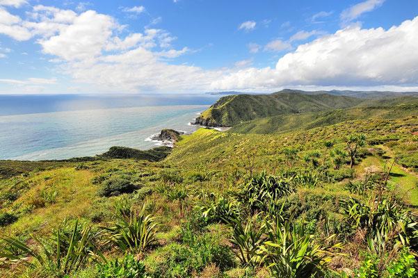 Neuseeland, Nordinsel, Küste, Sandstrand, Aussicht, Bucht, Martins Bay