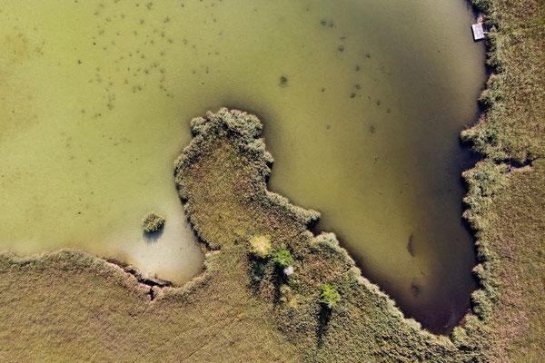 Drohnenfoto - Vogelperspektive - Drohne - Drohnenbild - Luftaufnahme - See - Harmatinger Weiher - Muster - Form