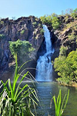 Australien, Australia, Nordaustralien, Northern Territory, Landschaft, Wasserfall, Wangi Falls
