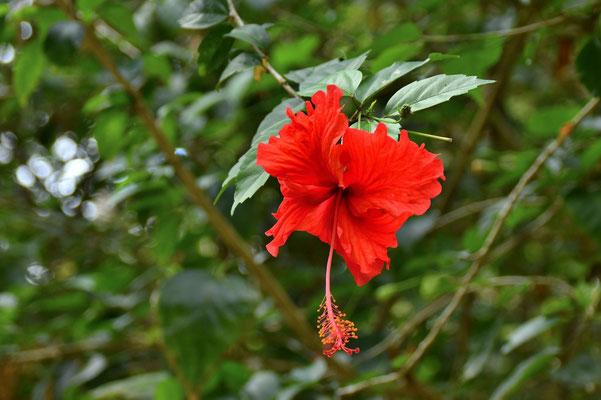 Pura Vida - Costa Rica - Pflanzen - Blumen - Bäume
