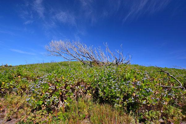 Australien, Australia, Westaustralia, Western Australia, Landschaft, Blauer Himmel, Baum