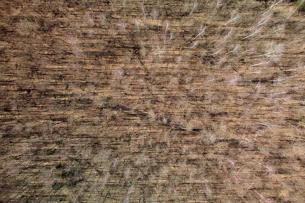 Vogelperspektive, Drohnenfoto, Drohnenbild, Luftaufnahme, Bayern, Alpen, Herbstlich, Nackt, Bäume ohne Blätter, Wald, Schatten, München Perlach