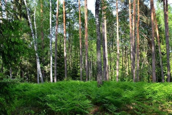 Litauen, Rundreise, Landschaft, Dzukijos Nacionalinis Parkas(Nationalpark)
