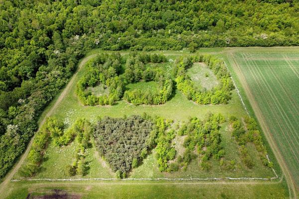 Vogelperspektive, Drohnenfoto, Drohnenbild, Luftaufnahme, Bayern, Feld, Grün, Sommer, München, 850, Bäume, Wald