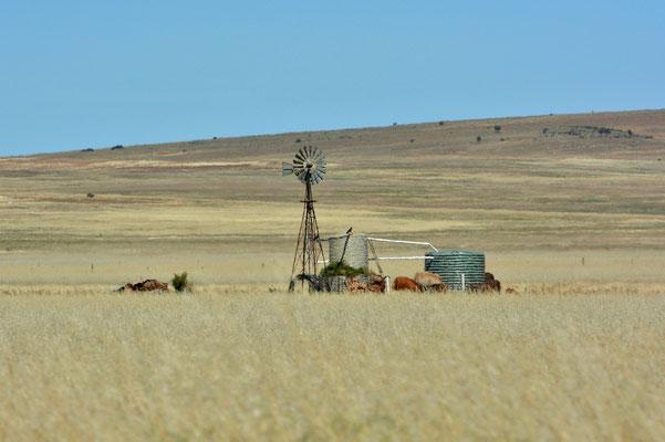 Australien, Australia, Südaustralien, South Australia, Landschaft, Ausgetrocknet, Gras, Windrad