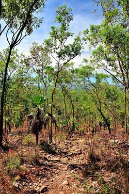 Australien, Australia, Nordaustralien, Northern Territory, Landschaft, Wald, Wanderung, Kakadu National Park, Mirrai Lookout Walk
