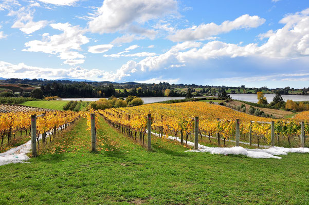 Neuseeland, Südinsel, Weinanbau, Herbst