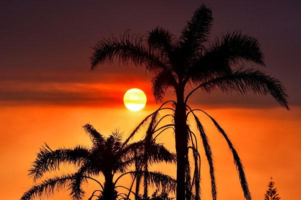Australien, Australia, Westaustralia, Western Australia, Landschaft, Sonnenuntergang, Palmen, Silhouette