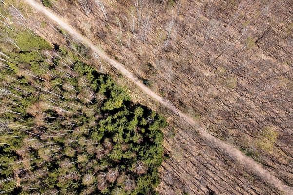 Vogelperspektive, Drohnenfoto, Drohnenbild, Luftaufnahme, Forst, Wald, München Trudering