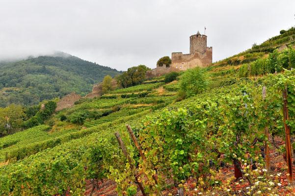 Frankreich, Elsass, Landschaft, Weinberg, Weinbau, Trauben, Burg, Schloss