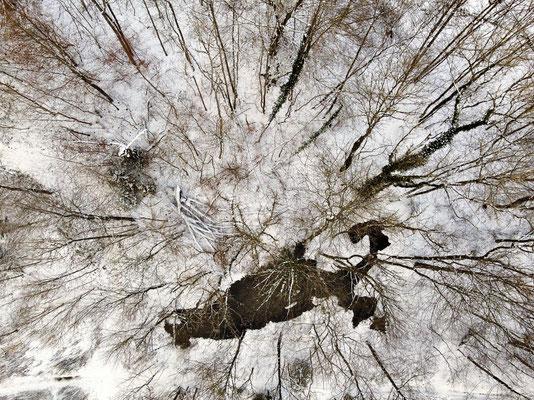 Vogelperspektive, Drohnenfoto, Drohnenbild, Schattenspiel, Luftaufnahme, Bayern, Feld, Weiss, Grün, Streifen, Bäume, Schatten, Muster, Flecken, Wald, Winter